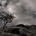 The Last Tree by Sean Wareing