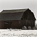 The Last Winter by Scott Ward