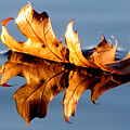 The Leaf by Tina Granitsas