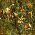 The Light In The Forest by RC DeWinter