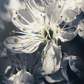 The Light Of Spring Petals by Jorgo Photography - Wall Art Gallery