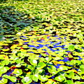 The Lily Pond #2 by Ed Weidman