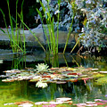The Lily Pond II by Lynn Andrews