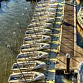 The Line Up Charleston Yacht Club Charleston City Marina South Carolina by Reid Callaway