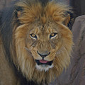 The Lion Dry Brushed by Ernie Echols