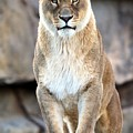 The Lioness by Christopher Miles Carter