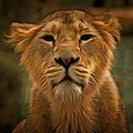 The Lioness by Scott Carruthers