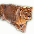 The Lioness - Vignette by Steve Harrington