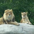 The Lions by Ernie Echols