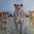 The Lions Of Africa 1 by Baris Kibar