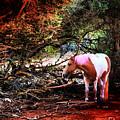 The Little Pink Unicorn By Pedro Cardona by Pedro Cardona Llambias