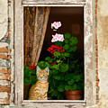 The Little Tuscan Tiger by Bob Nolin