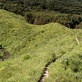 The Loess Hills by Susan Rissi Tregoning