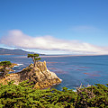 The Lone Cypress Pebble Beach by Scott McGuire