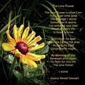 The Lone Flower by Jessica Stewart