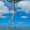 The Lone Palm by Megan Martens
