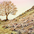 The Lone Sentry-sycamore Gap. by John Cox