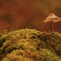 The Lonely Mushroom by Sarah Kirk