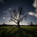 The Lonely Tree by Angel  Tarantella