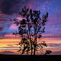 The Lonely Tree by Francis Lavigne-Theriault