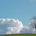 The Lonely Tree by Mark Hughes