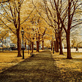 The Long Golden Walk by Jeff Folger