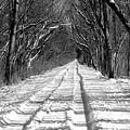 The Long Winter Walk by Jenny Gandert