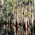 The Louisiana Bayou by Dave Sribnik
