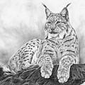 The Lynx 2017 Version by Iren Faerevaag