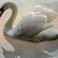 The Magical Swan  by Bob Christopher