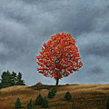 The Maple On The Ridge by Allan OMarra