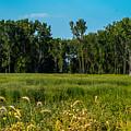 The Marsh  by Kristin Hunt