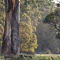 The Meadow by Racheal Christian