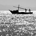 The Minimum Trawl  by Jez C Self