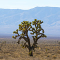 The Mojave Desert by Matt McDonald