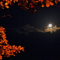The Moon And Red by Mahara Martinez