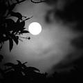 The Moon - La Luna 11 by Totto Ponce