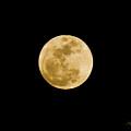 The Moon by Scott Pellegrin