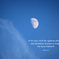 The Moon With A Psalm by Debbie Nobile