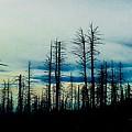 The Morning Burn by Jennifer Lake