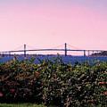 The Mt Hope Bridge Bristol Rhode Island by Tom Prendergast