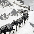 The Mule Pack by Frederic Sackrider Remington