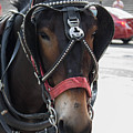 The Mule That Poses by My NOLA Eye