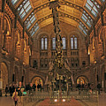 The Museum Of Natural History... London by Guy Ciarcia
