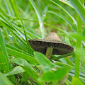 The Mushroom by Ann Keisling