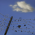 The Musical Barbed Wire Birds by Joseph Yvon Cote