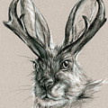 The Mythical Jackalope by MM Anderson