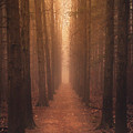 The Narrow Path by Rob Blair