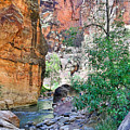 The Narrows Of The Virgin River  by Robert Meyers-Lussier