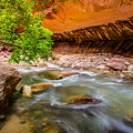 The Narrows Zion National Park by Scott McGuire
